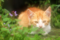 Tiny cat in soft light. Dreamy kitten, used soft filter stock image