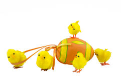 Tiny Chicks. With white background at Easter Royalty Free Stock Images