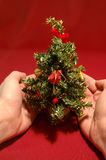 Tiny Christmas tree Royalty Free Stock Photos