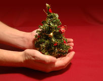 Tiny Christmas tree. Male hands holding a tiny Christmas tree on a red background Royalty Free Stock Photography
