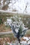 Tiny Christmas tree fir dusted with snow outside stock image