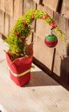 Tiny Christmas tree Stock Photography
