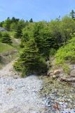A tiny clear stream running down Marble Mountain onto the beach on Cape Breton Island Royalty Free Stock Photography
