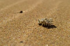 Tiny coral on sandy beach royalty free stock photography