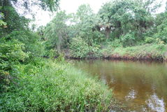 Tiny Creek. A tiny creek in the Rye Nature Preserve in Manatee County Florida Stock Photography