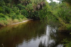 Tiny Creek. A tiny creek in the Rye Nature Preserve in Manatee County Florida Stock Image