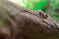 Tiny cricket macro closeup stock images
