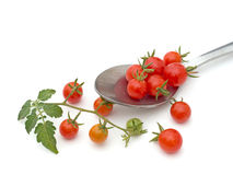 Tiny currant tomatoes - home grown, organic. Not all perfect. Stock Photo