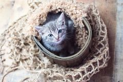 Tiny cute baby silver tabby cat. Sitting on vintage wood background stock image