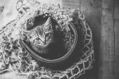 Tiny cute baby silver tabby cat. Sitting on vintage wood background stock images