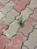 A Tiny Cute Plant On The Street stock photos