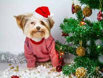 Little puppy celebrates new year royalty free stock image
