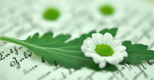 Tiny Daisies on Diary Royalty Free Stock Photo