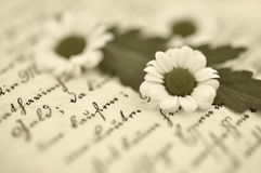 Tiny Daisies on Diary Stock Image