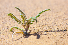 Tiny desert plant in sand. Stock Photo