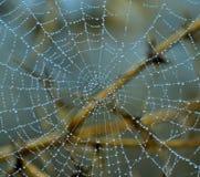 Tiny dewdrops on fine cobweb Stock Photo