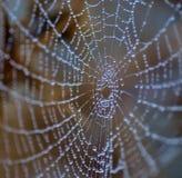 Tiny dewdrops on fine cobweb Stock Image