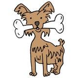 Tiny dog carrying large bone Stock Photo