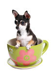 Tiny Dog In Big Tea Cup Royalty Free Stock Photography