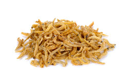 Tiny dried fish isolated on white background Stock Photography