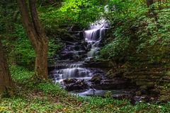 Tiny falls. Small stream in forest hill park. Located in Cleveland Ohio Royalty Free Stock Photography