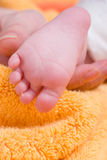 Tiny feet Stock Images