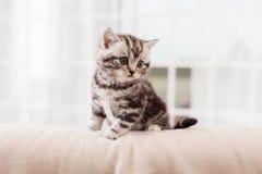Tiny feline. Royalty Free Stock Image