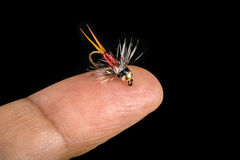 Tiny Fishing Fly on Finger Tip Isolated on Black   Royalty Free Stock Photography
