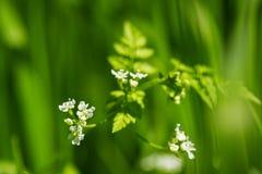 Tiny flower close-up natural beauty Royalty Free Stock Photos