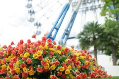 The tiny flower in front of ferris wheel Royalty Free Stock Photos