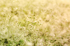 Tiny flower grass at relax time Stock Photo