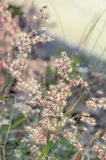 Tiny flower grass at relax time. soft focus. pastel color Stock Image