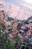 Tiny flower grass at relax time. soft focus. pastel color Stock Photography
