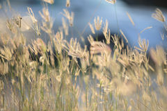 Tiny flower grass at relax time Stock Photos