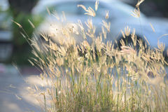 Tiny flower grass at relax time Stock Images