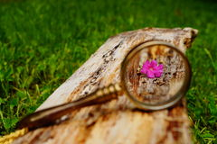 Tiny flower in magnifying glass Royalty Free Stock Image