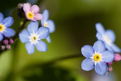 Tiny flowers Royalty Free Stock Photo