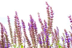 Tiny flowers Stock Photo