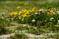Tiny flowers on the ground Stock Photography