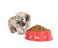 Tiny fluffy puppy Stock Photos