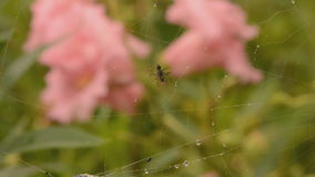 Tiny fly cought in spiders web Royalty Free Stock Image