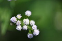 Tiny forest flowers stock photo