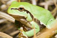 Tiny frog Stock Image