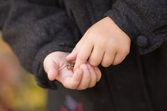 Tiny frog at child`s hands in the forest. stock image