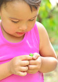Tiny frog on hands of a little girl in summer Stock Photos