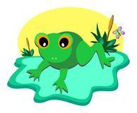 Tiny Frog Pond Stock Image