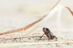 Tiny frog on sand Royalty Free Stock Photography