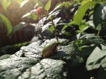 Tiny frog sitting on leaf Stock Photos