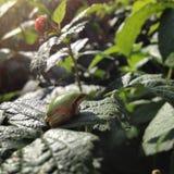 Tiny frog sitting on leaf Royalty Free Stock Image
