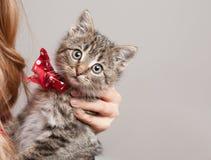 Tiny furball cutie. Stock Image